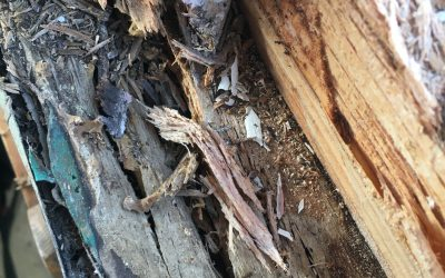 Fixing wood rot in a timber window